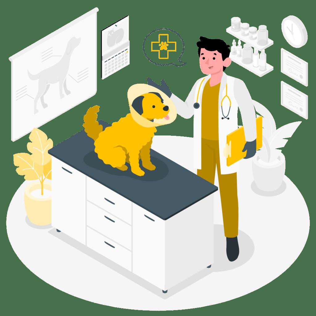 Urgencia veterinaria 24 horas en Bogotá