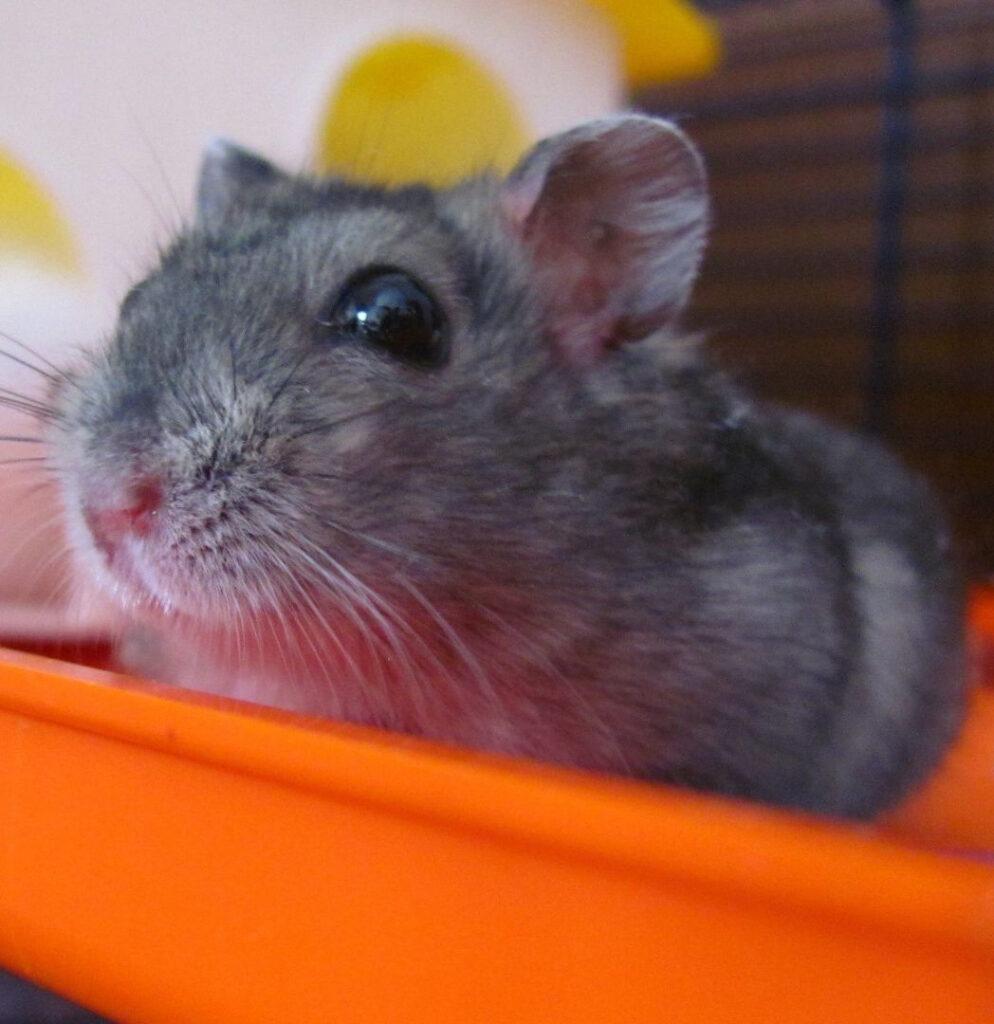 Veterinarias para hamsters en Bogotá
