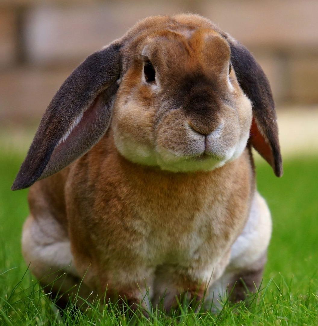 Urgencias veterinarias para conejos en Bogotá