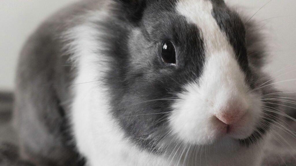 Veterinarias para conejos en Bogotá