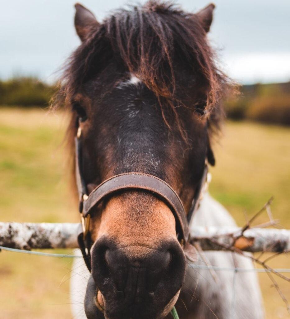 Veterinarias para equinos en Bogotá