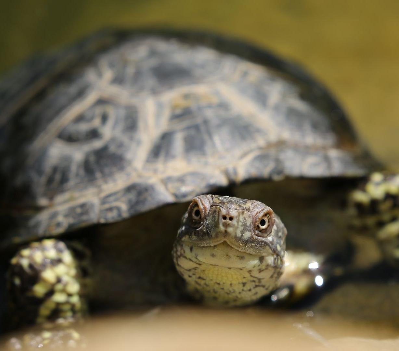 Urgencias veterinarias para réptiles en Bogotá